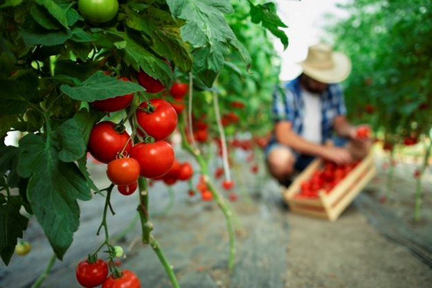 Need to Know When Starting an Organic Farm